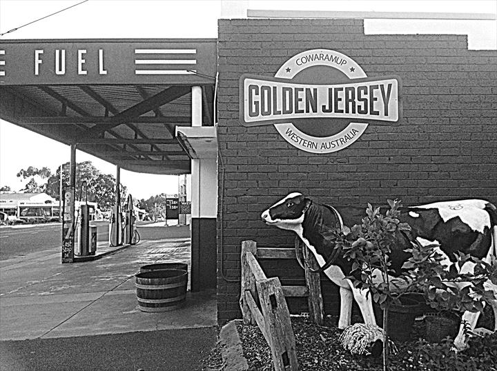 Image result for the golden jersey cowaramup